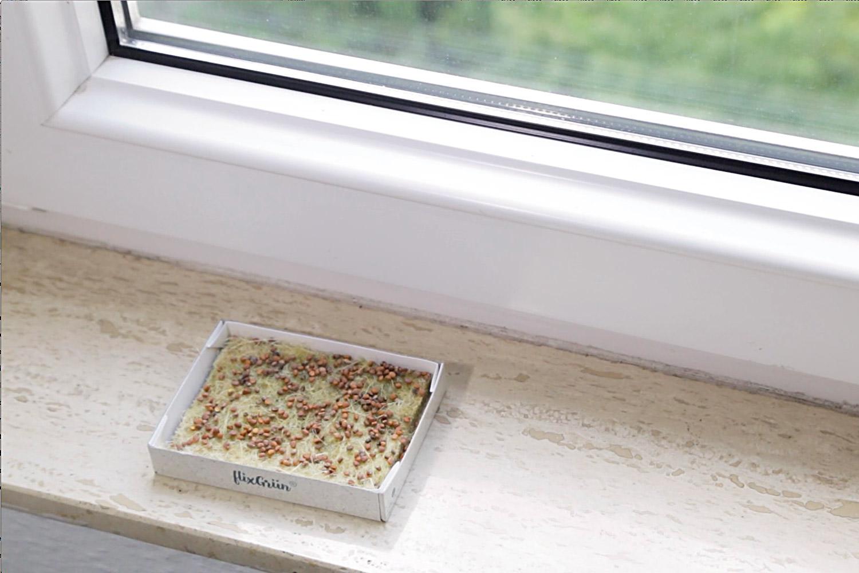 gruenkonfekt – die Keimlinge brauchen Licht zum Gedeihen